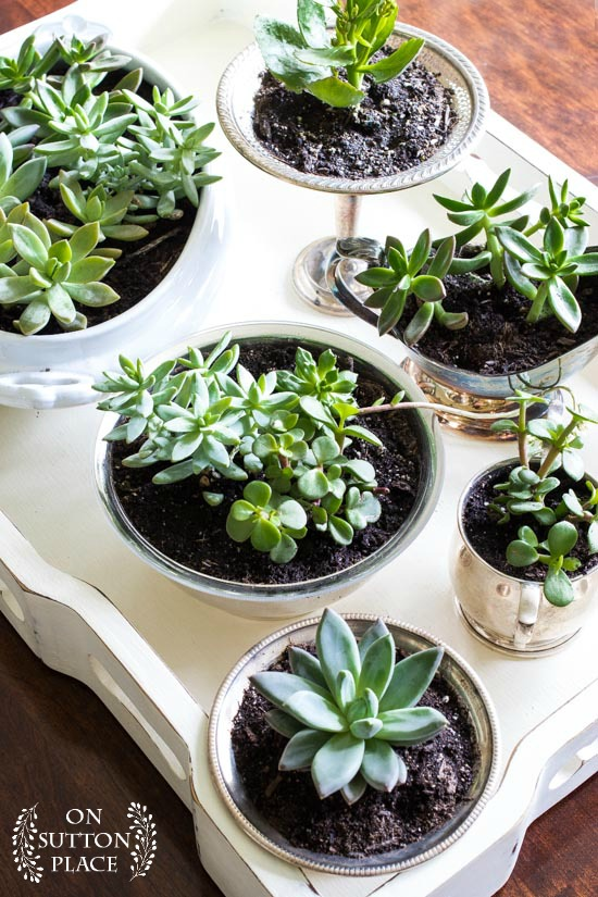 coffee-table-succulent-garden-on-a-tray